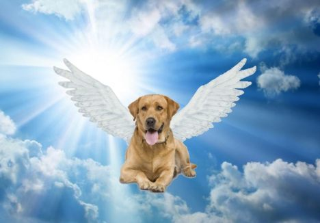 paradiso-dei-cani
